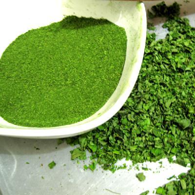 How to use moringa to cure diabetes mellitus