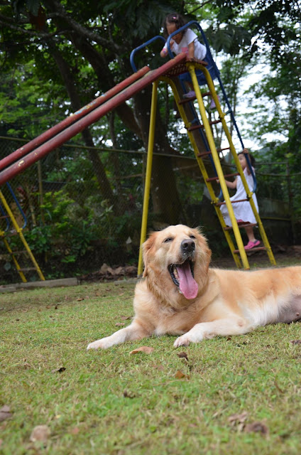 Dog yawning with little girls climbing the slide in the background