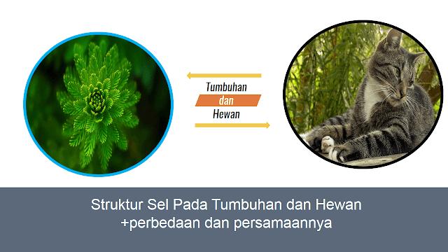 Perbedaan dan Persamaan Sel Tumbuhan dan Sel Hewan