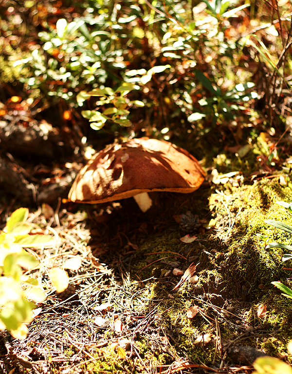 Mushrooms Rockefeller Preserve
