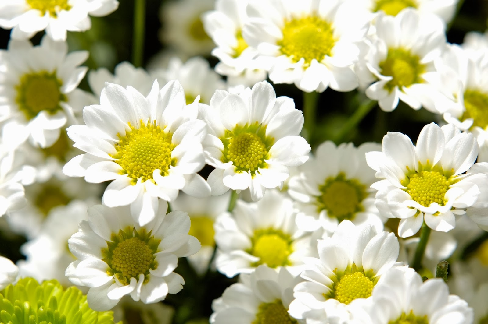 Flowers Wallpapers: January 2014