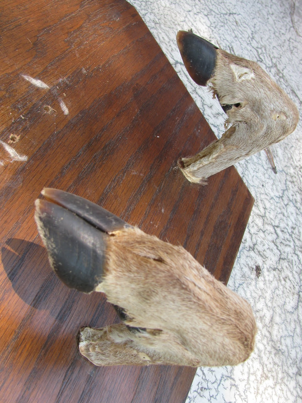 deer hooves - photo #32