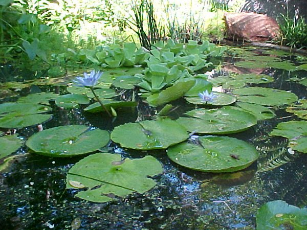 Random hongos plantas y formas de la naturaleza iii for Hongos en las plantas de jardin