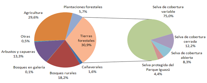 Nea misiones forestal informaci n t cnica for Tipos de plantas forestales