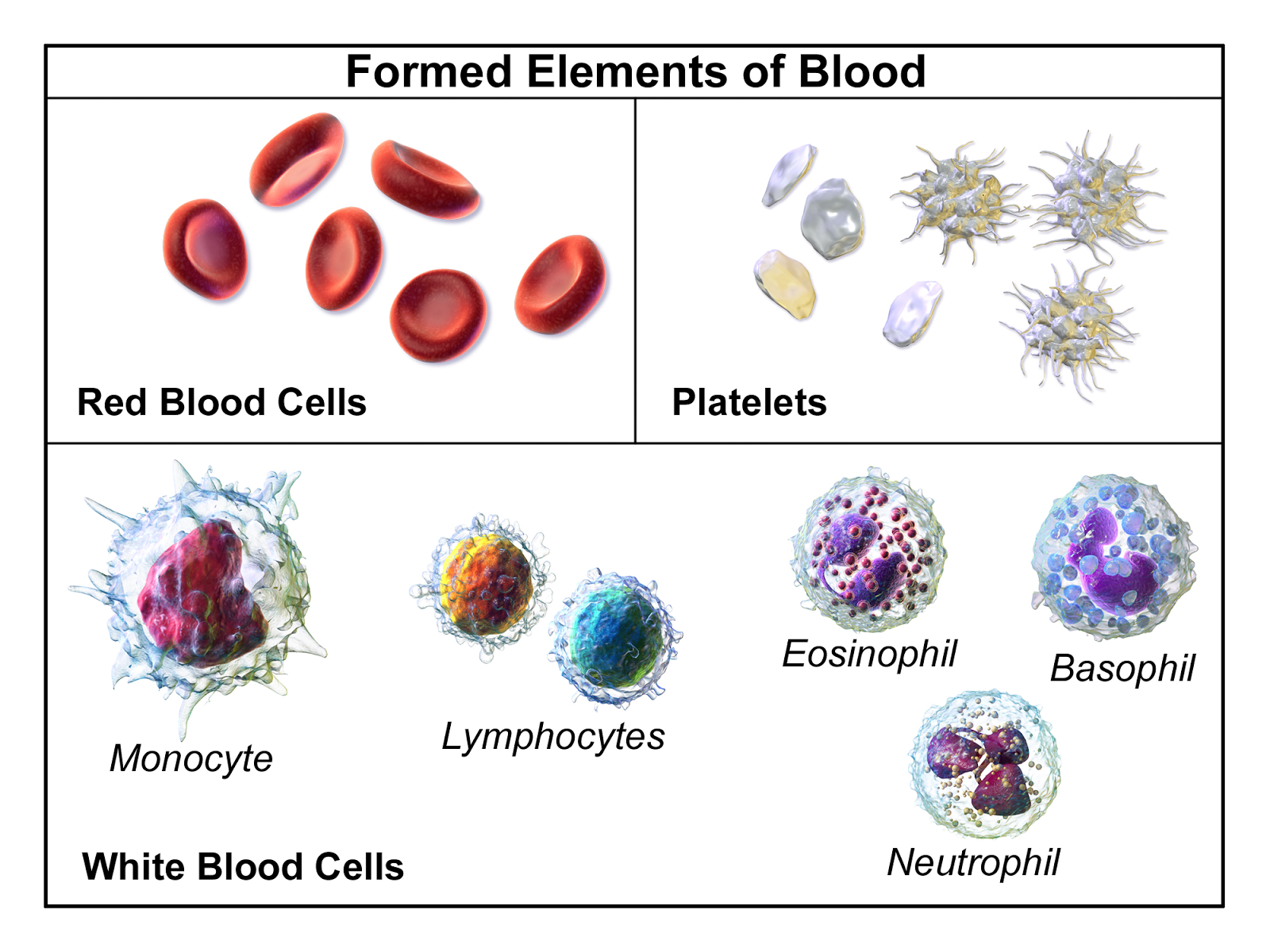the characteristics roles and components of blood Plasma products.