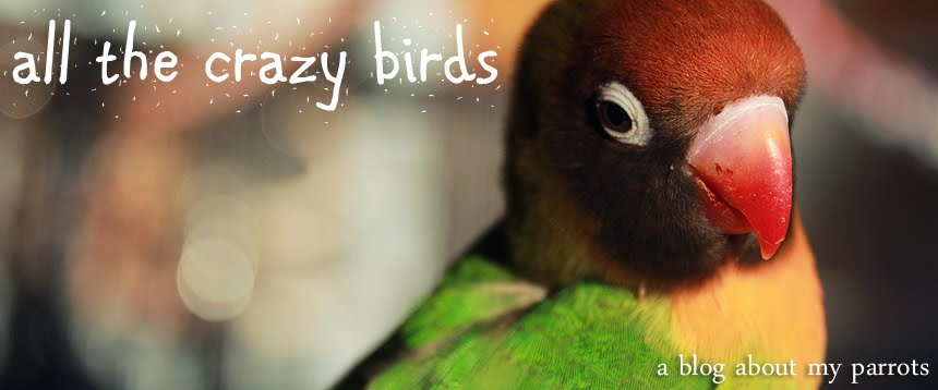 All The Crazy Birds