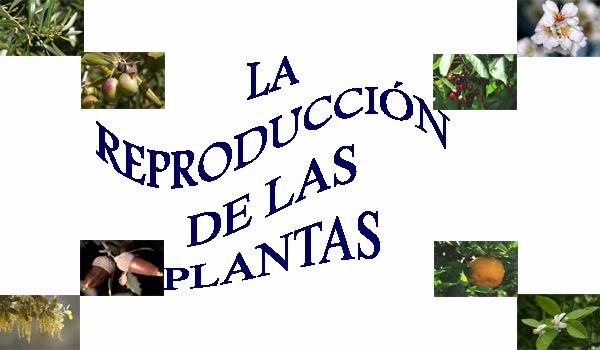 http://cplosangeles.juntaextremadura.net/web/edilim/tercer_ciclo/cmedio/las_plantas/la_reproduccion_sexual_plantas/la_reproduccion_sexual_plantas.html
