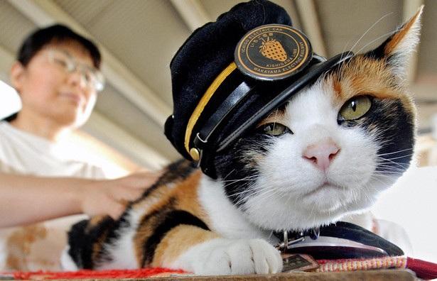 Peringatan / Festival Tanggal Hari Kucing Dunia Apah Ada Hari Libur Nasional ?