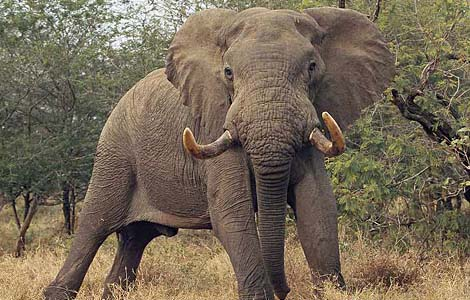 elephants amazing pictures in natural environment.