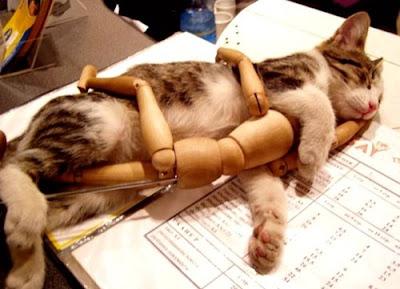 網友 爆笑版虐貓