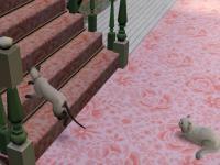 catstory2-1.jpg