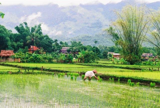 Trekking Mai Chau