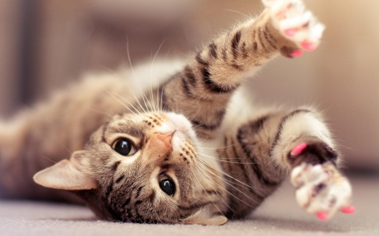 http://3.bp.blogspot.com/-NMTbEmU2wJE/UQ-rvvMSSjI/AAAAAAAAAxw/3t9-6yfJlBo/s1600/cat-kittens-pet-1280x800.jpg