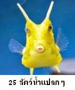 25 สัตว์น้ำรูปร่างหน้าตาประหลาด