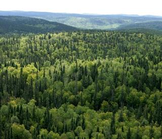 7 Hutan Terluas Di Dunia