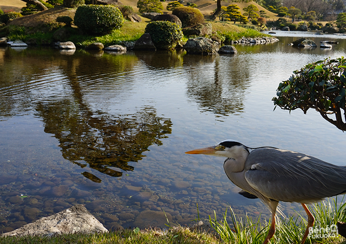 Heron at Suizen-ji garden