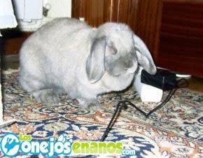 Como evitar que los conejos se coman los cables