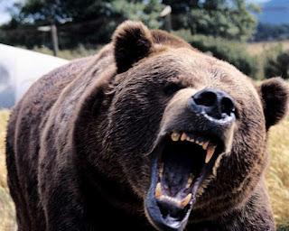 sognare orso