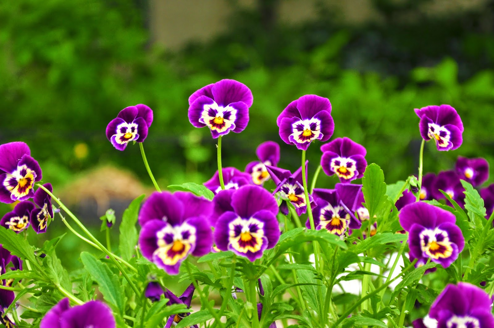 Chidinma inspirations flowers with faces human shaped bodies flowers with faces human shaped bodies izmirmasajfo