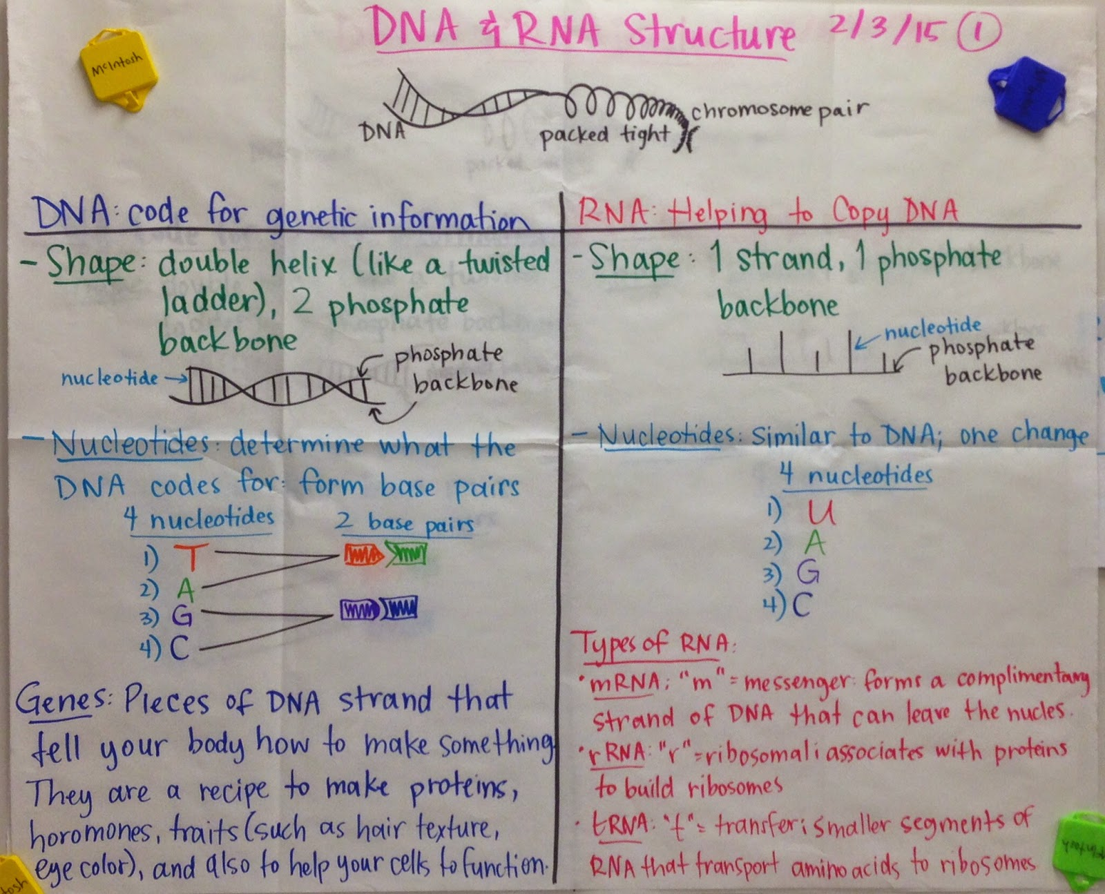 biology 3 3 dna structure Dna replication is a semi-conservative process because half of the parent dna molecule is conserved in each of the two daughter dna molecules the process of dna replication is actually much more complex than this simple summary.