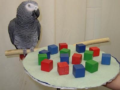 hewan paling cerdas di dunia