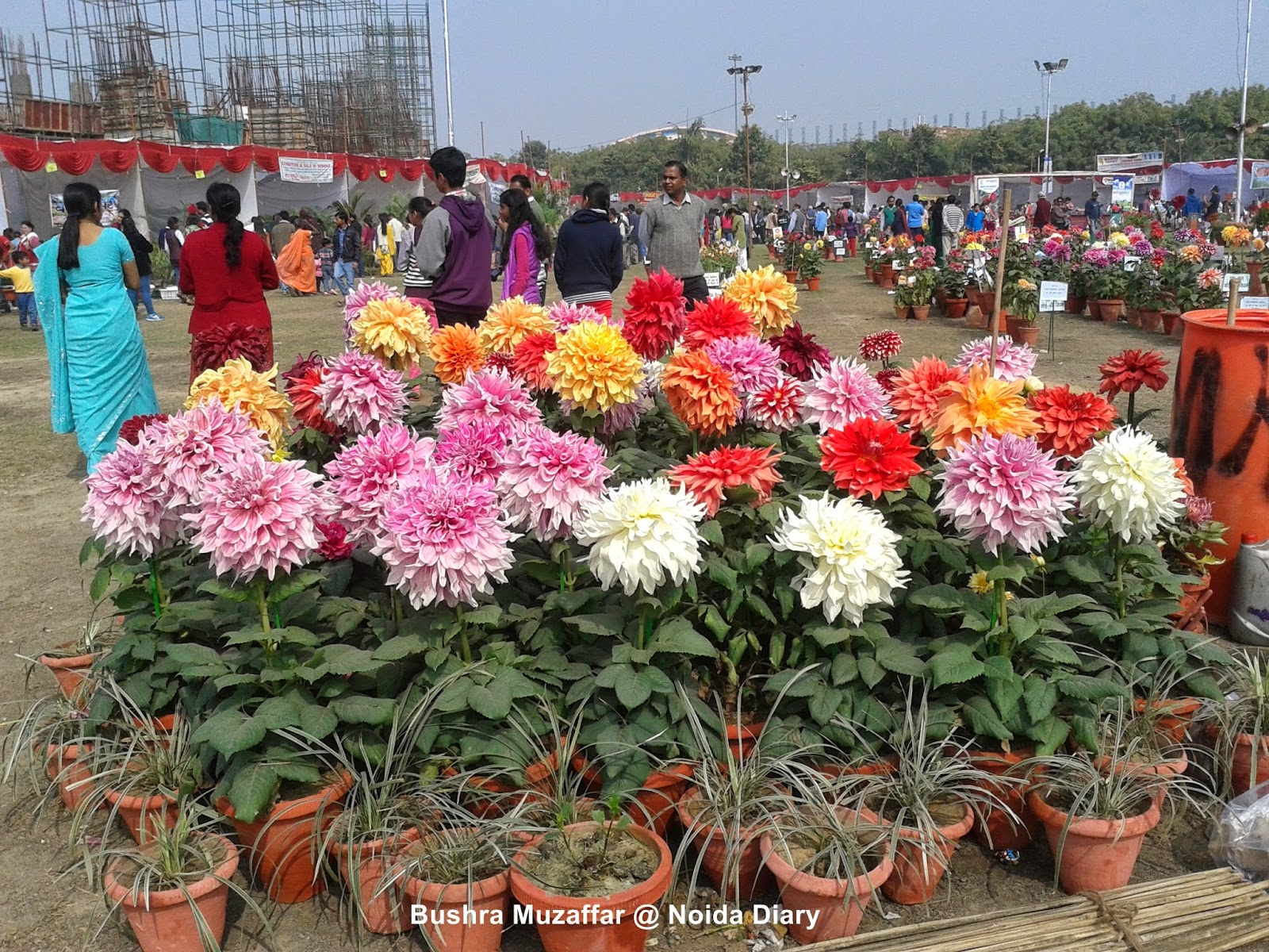 Noida Flower Show 2014
