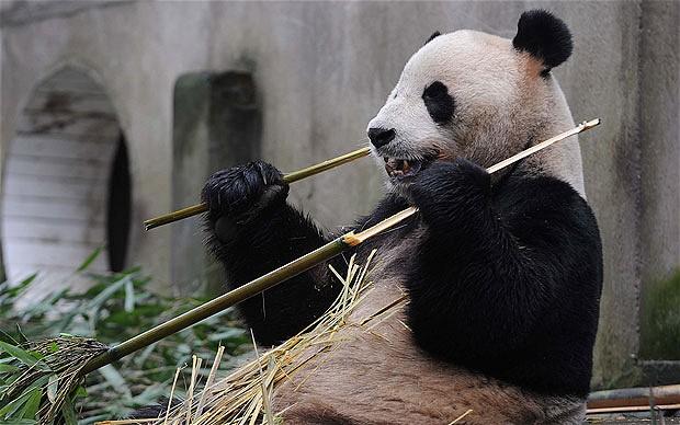 Transglobal Express Blog: FedEx flies Chinese pandas to ...