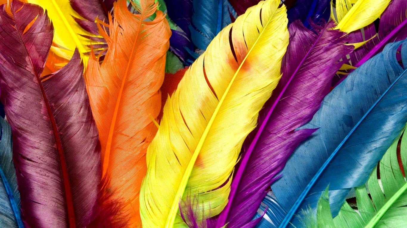 http://3.bp.blogspot.com/-NOcUKQsuF8Y/UFZKwJiwMMI/AAAAAAAAJNk/qs1vle0CyS4/s1600/Colored_feathers_1366x768_hd_wallpapers.jpg