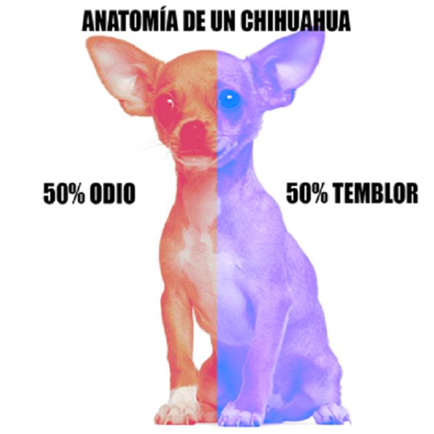Bromas Mágicas: Anatomía de un chichuahua