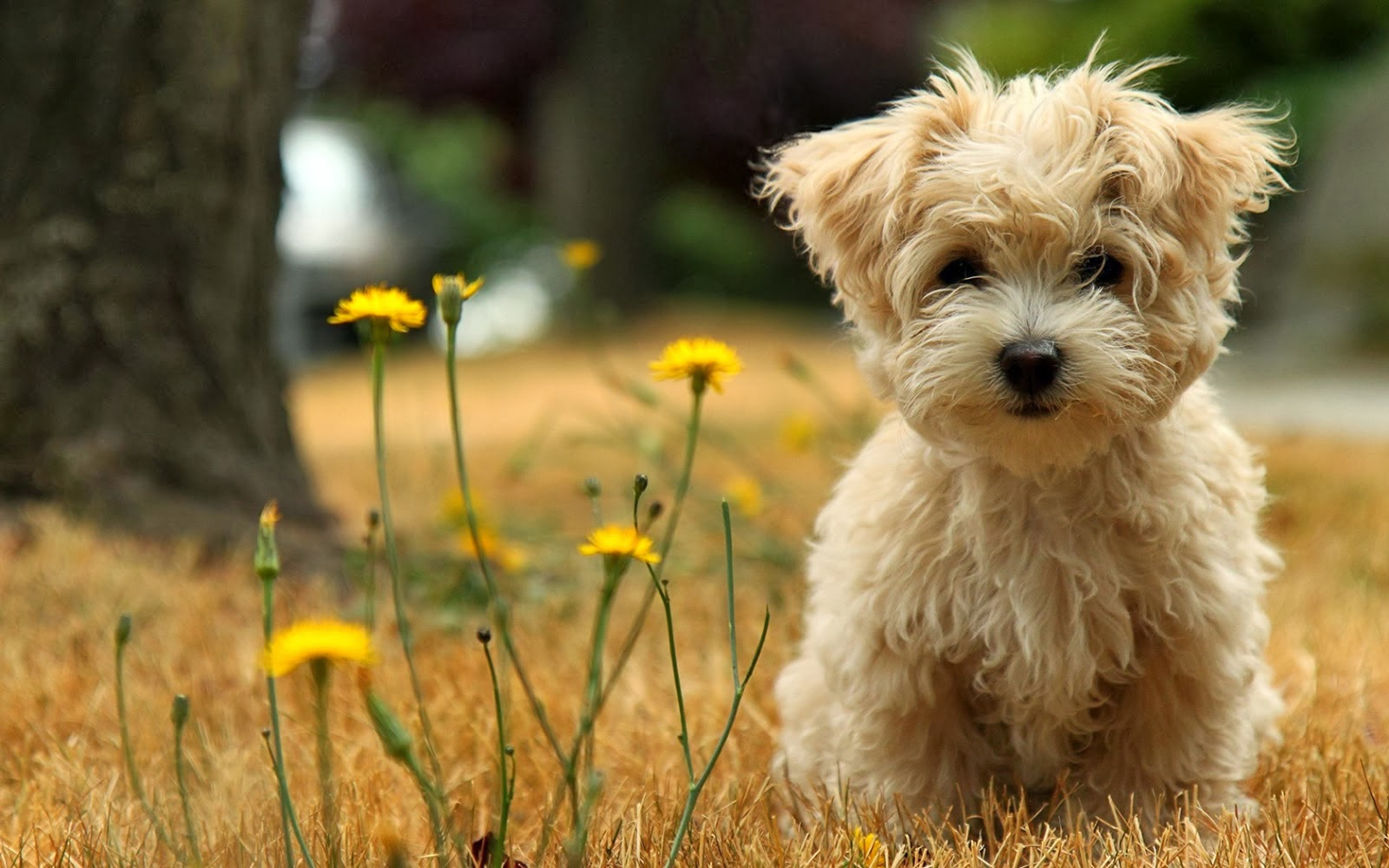 Cute puppies hd wallpapers hd wallpapers blog for Pictures of cute dogs