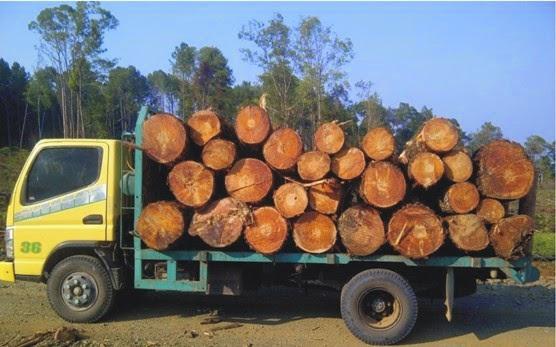 pembelian kayu log gelondong