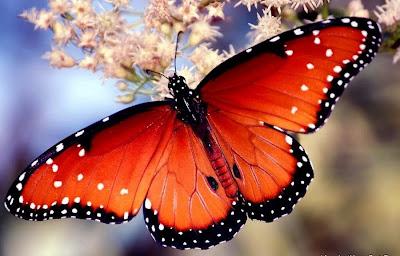 Fluture exotic