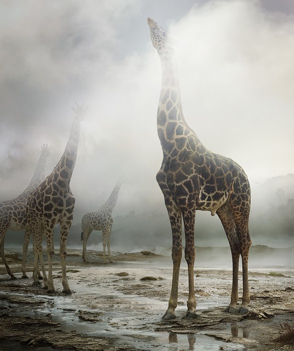 Beautiful photographs by Simen Johan