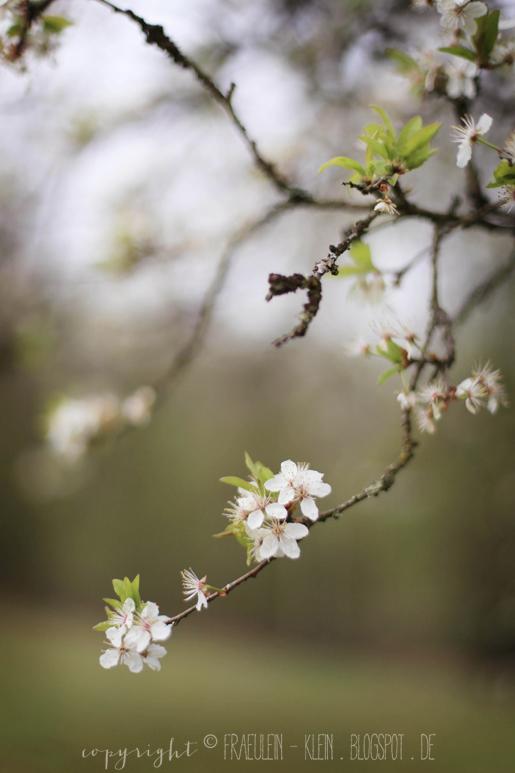 DIY Fingerprint-Eier und ein Spaziergang im Frühling