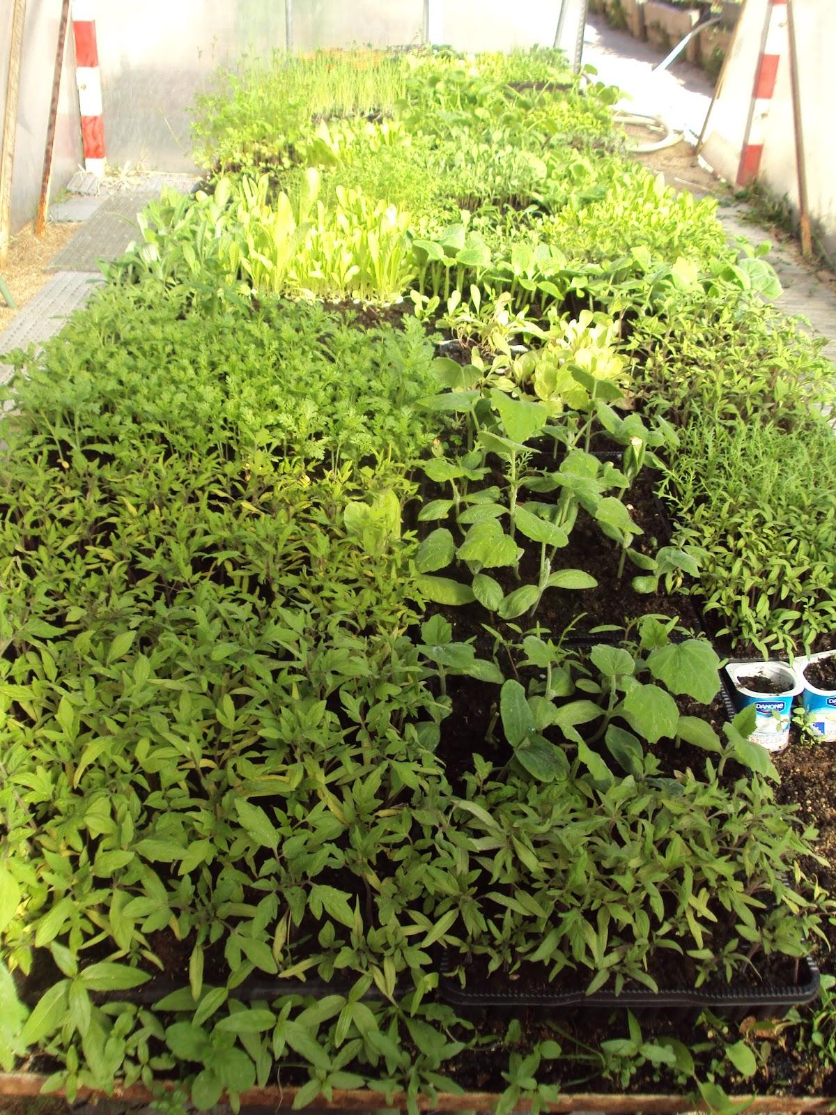 En torno al huerto distribuir las plantas en las - Plantas de huerto ...