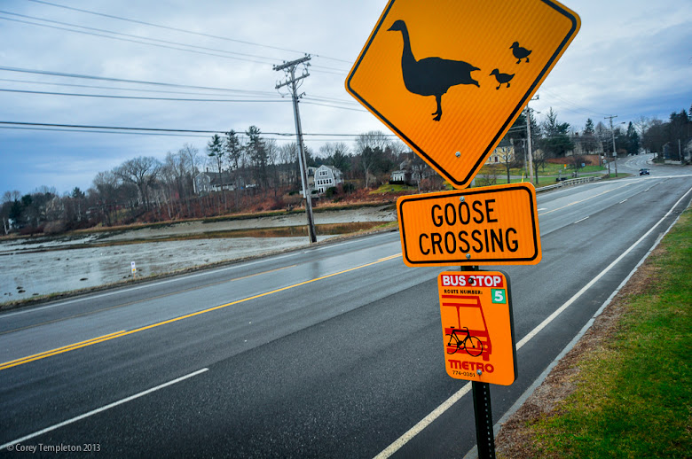 Corey templeton photography goose on the loose for Bjs portland maine