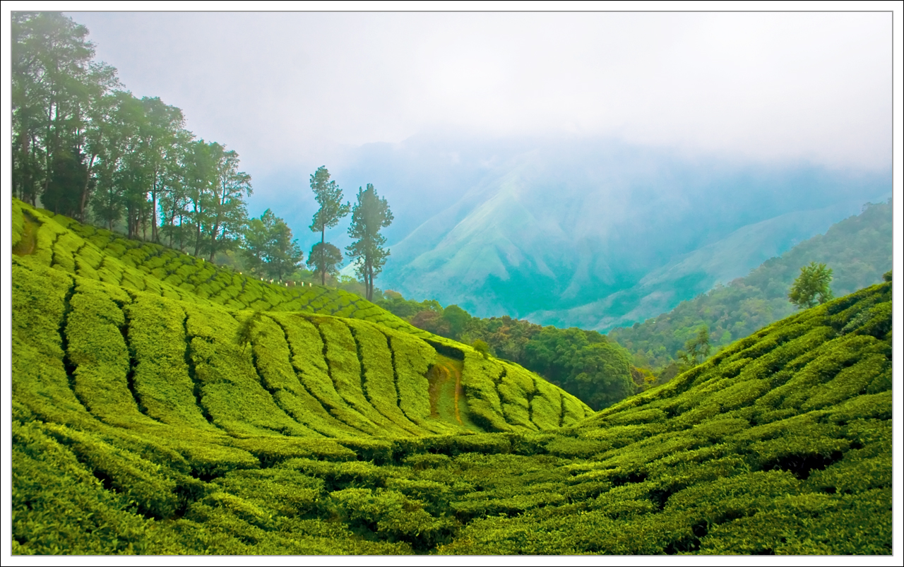 Kerala Munnar In South India Beautiful Hill Station Wallpapers