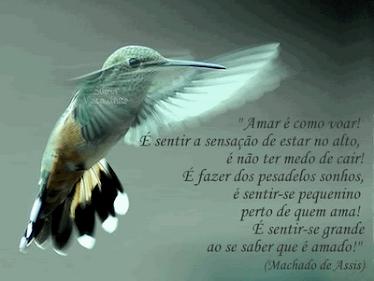 Amar...e como voar.....