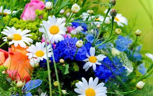 Hình nền đẹp mùa xuân - ảnh 25