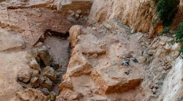 Manusia Neanderthal Zaman Dahulu Adalah Pemakan Tumbuhan