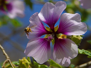 Bees Purple Flowers