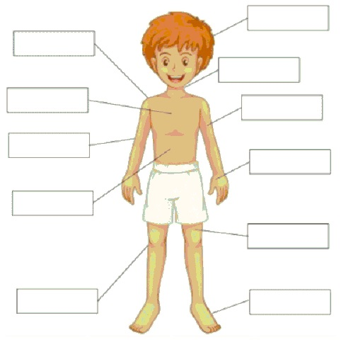 ANA\'s ESL MATERIALS: VOCABULARY: Body Parts
