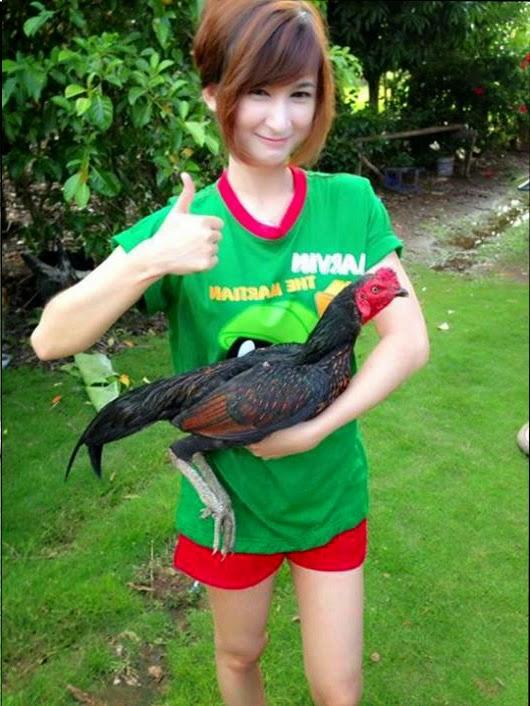 Ciri Sisik Kaki Ayam Bangkok Aduan yang Mematikan   Ayam Juara