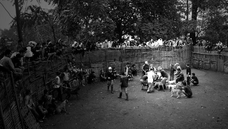 "Suasana ""Gladiator"" Adu Bagong. 2012"