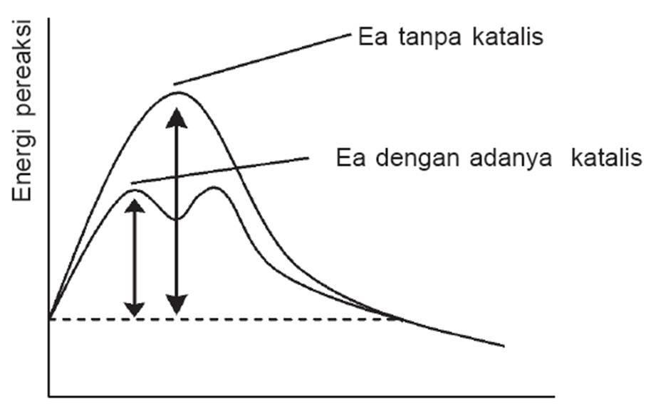 Laju reaksi 2011 meskipun katalis menurunkan energi aktivasi reaksi tetapi ia tidak mempengaruhi perbedaan energi antara produk dan pereaksi ccuart Image collections