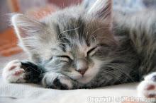 Kit-Riverkit-She-cat