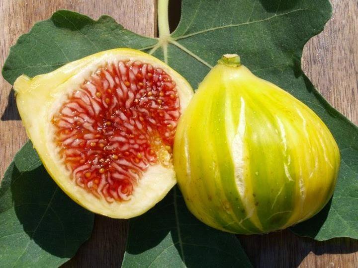 figs varieties