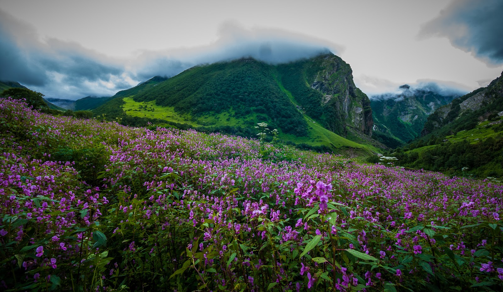 Valley of Flowers Trip Brief Itinerary