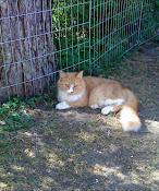 """My Primadonna Cat  """"Missi"""""""