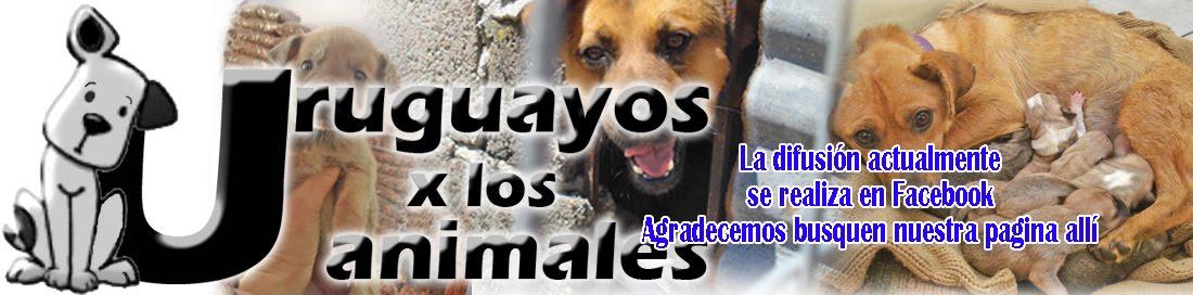Uruguayos por los Animales